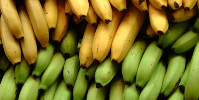 The HIV of Bananas