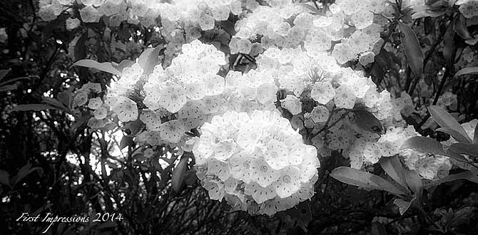 Black and White: Mt Laurel