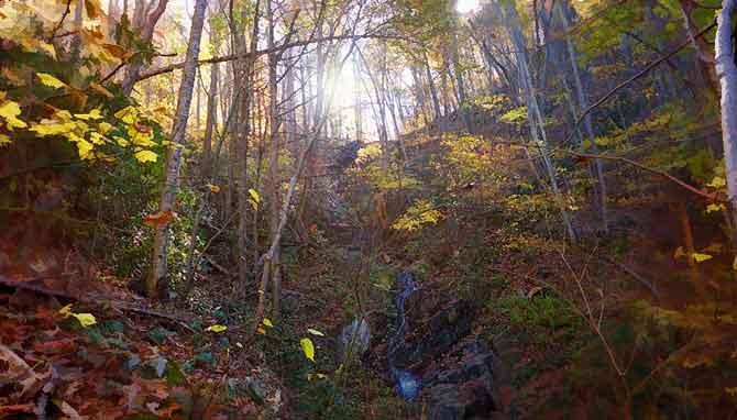 Fading Light of Fall