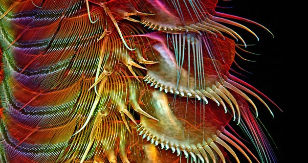http://www.nikonsmallworld.com/galleries/entry/2014-photomicrography-competition/8