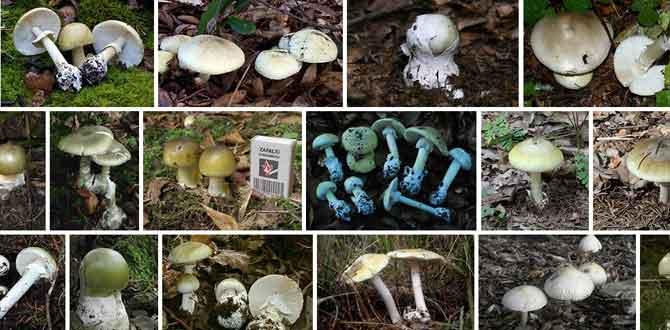 Delicious, Deadly, Deceptive Deathcap Mushroom